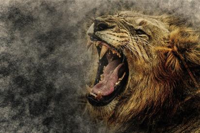lion-2427389_1280