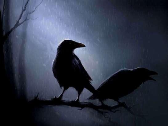 crow dark